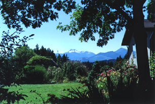 [Olympic Mountains Viewed Through Back Yard Garden]