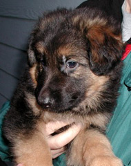 Tannhauser Pup from 2005